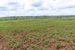 The Water Project: Kikingura Kidwaro Community -  Landscape