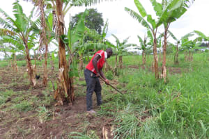 The Water Project: Kyabagabu Community -  Gardening