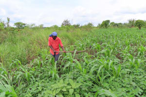 The Water Project: Kyabagabu Community -  In The Garden