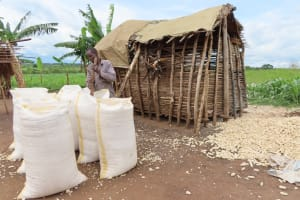 The Water Project: Kyabagabu Community -  Processing Maize