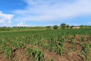 The Water Project: Kyandangi Community -  Landscape
