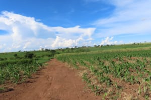 The Water Project: Kyandangi Community -  Fields In Community