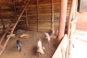 The Water Project: Kiryamasasa Community -  Pig Pen