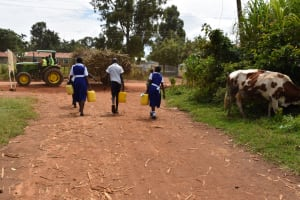 The Water Project: Shamberere Primary School -  Carrying Water To School