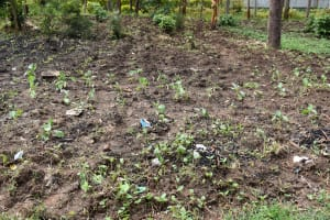 The Water Project: Shamberere Primary School -  School Agriculture Farm