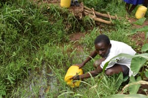 The Water Project: Shamberere Primary School -  Water From A Stream