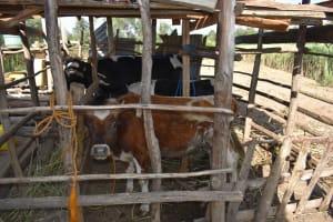 The Water Project: Iyala Community, Iyala Spring -  Animal Pen