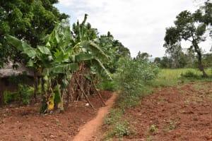 The Water Project: Mungakha Community, Mwilima Spring -  Bananas And Cassava