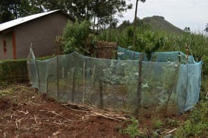 The Water Project: Mungakha Community, Mwilima Spring -  Garden With Mosquito Net