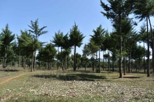 The Water Project: Muhoni Community, Kekongo Forest Spring -  Landscape