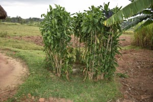 The Water Project: Chombeli Community, Ernest Kuta Spring -  Bathroom Shelter