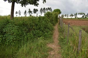 The Water Project: Chombeli Community, Ernest Kuta Spring -  Path To Spring