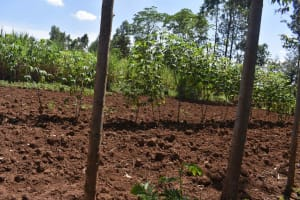 The Water Project: Muting'ong'o Community, Chivuyi Spring -  Farmland