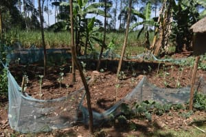 The Water Project: Muting'ong'o Community, Chivuyi Spring -  Garden