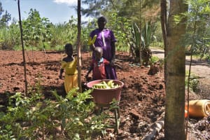 The Water Project: Muting'ong'o Community, Chivuyi Spring -  Selling Bananas