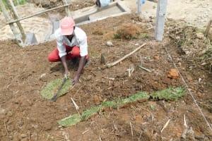 The Water Project: Nangurunya Community, Robert Musali Spring -  Planting Of Grass