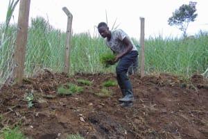 The Water Project: Bukhakunga Community, Wakukha Spring -  Planting Grass