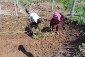The Water Project: Shamoni Community, Shiundu Spring -  Planting Grass