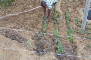 The Water Project: Shamoni Community, Laban Ang'ata Spring -  Planting Grass