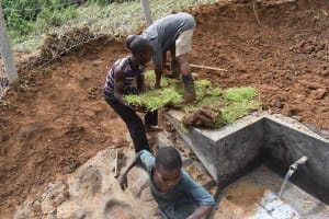 The Water Project: Mundoli Community, Pamela Atieno Spring -  Grass Planting