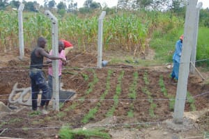 The Water Project: Makunga Community, Tabarachi Spring -  Fencing