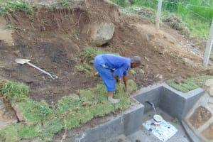 The Water Project: Malimali Community, Onyango Spring -  Grass Planting