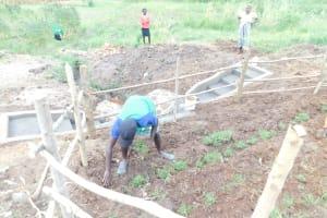 The Water Project: Khunyiri Community, Edward Spring -  Grass Planting