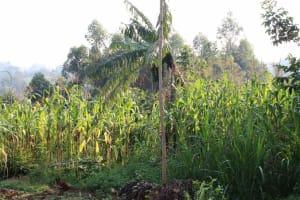 The Water Project: Murumba Community, Patrick Muyembere Spring -  Farm Lands