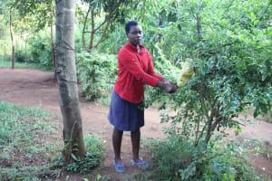 The Water Project: Murumba Community, Patrick Muyembere Spring -  Handwashing Station