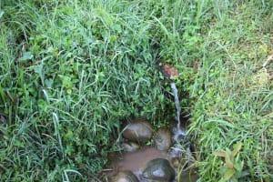 The Water Project: Murumba Community, Patrick Muyembere Spring -  Water Source