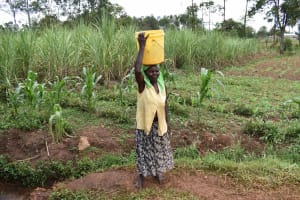 The Water Project: Chimoroni Community, Maurice Luta Spring -  Carrying Water