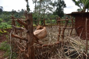 The Water Project: Chimoroni Community, Maurice Luta Spring -  Cow Pen