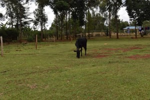 The Water Project: Chimoroni Community, Maurice Luta Spring -  Grazing Field