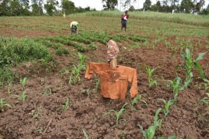 The Water Project: Chimoroni Community, Maurice Luta Spring -  Farm