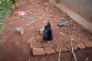 The Water Project: Chimoroni Community, Maurice Luta Spring -  Poultry