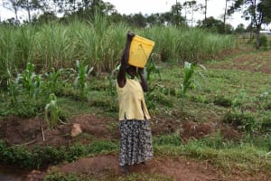 The Water Project: Chimoroni Community, Maurice Luta Spring -  Water In Jerrican