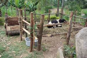 The Water Project: Shiana Community, Masiache Spring -  Animal Pen