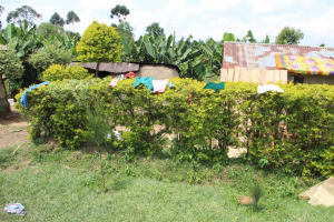 The Water Project: Shiana Community, Masiache Spring -  Clothes Drying