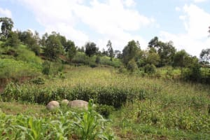The Water Project: Shiana Community, Masiache Spring -  Landscape