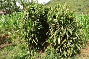 The Water Project: Mungakha Community, Mungakha Spring -  Bathing Shelter