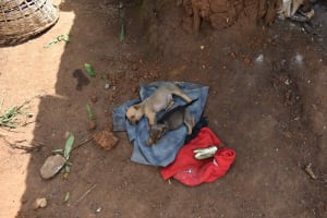 The Water Project: Mungakha Community, Mungakha Spring -  Puppies Sleeping
