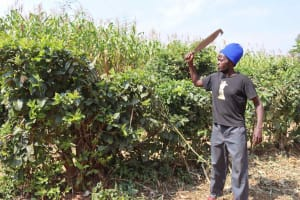 The Water Project: Makunga Community, Akinda Spring -  Harron Pruning Hedge