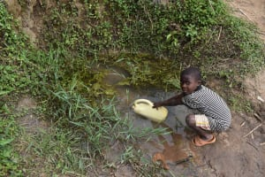 The Water Project: Makunga Community, Malaha Spring -  Collecting Water