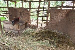 The Water Project: Makunga Community, Malaha Spring -  Animal Pen