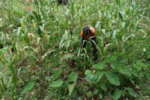 The Water Project: Makunga Community, Malaha Spring -  Farming