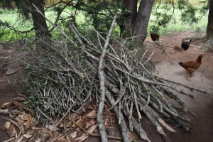 The Water Project: Makunga Community, Malaha Spring -  Firewood