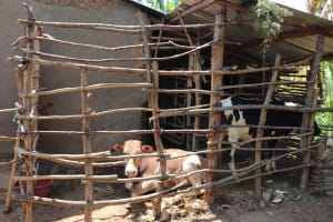 The Water Project: Emulele Community, Fanice Opati Spring -  Animal Pen