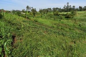 The Water Project: Emulele Community, Fanice Opati Spring -  Landscape