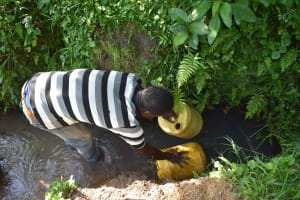 The Water Project: Isembe Community, Inyende Spring -  Filling Jerrycans