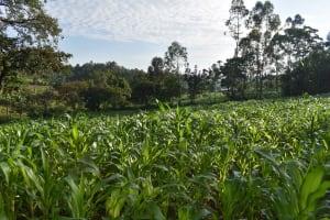 The Water Project: Emaongoyo Community, Philip Mwando Spring -  Farmlands